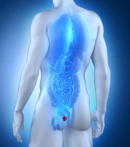 Gewebe Prostata Leuchtprostata